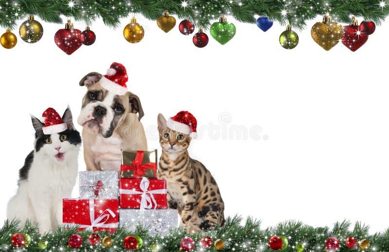 Милая группа любимчика на рождестве стоковая фотография rf