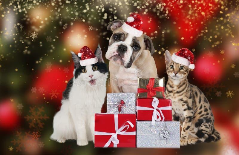 Милая группа любимчика на рождестве стоковые изображения