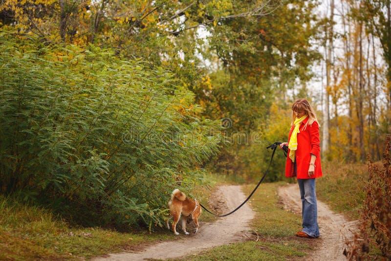 Милая девушка идя с собакой Shiba Inu в парке осени стоковые изображения