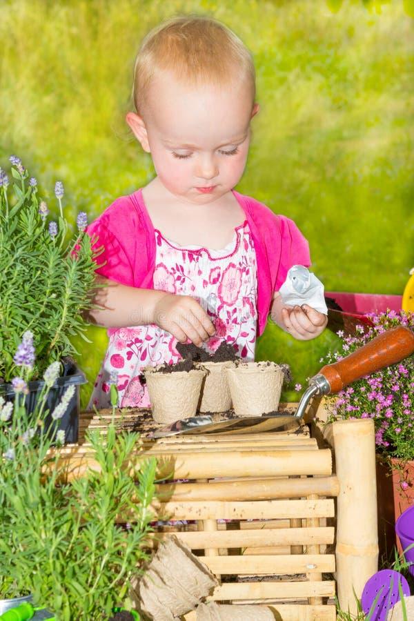 Милая маленькая девочка садовничая в солнце стоковая фотография rf