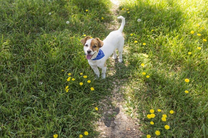 Милая молодая собака имея потеху в парке outdoors Время весны… подняло листья, естественная предпосылка Зеленый стоковые изображения rf