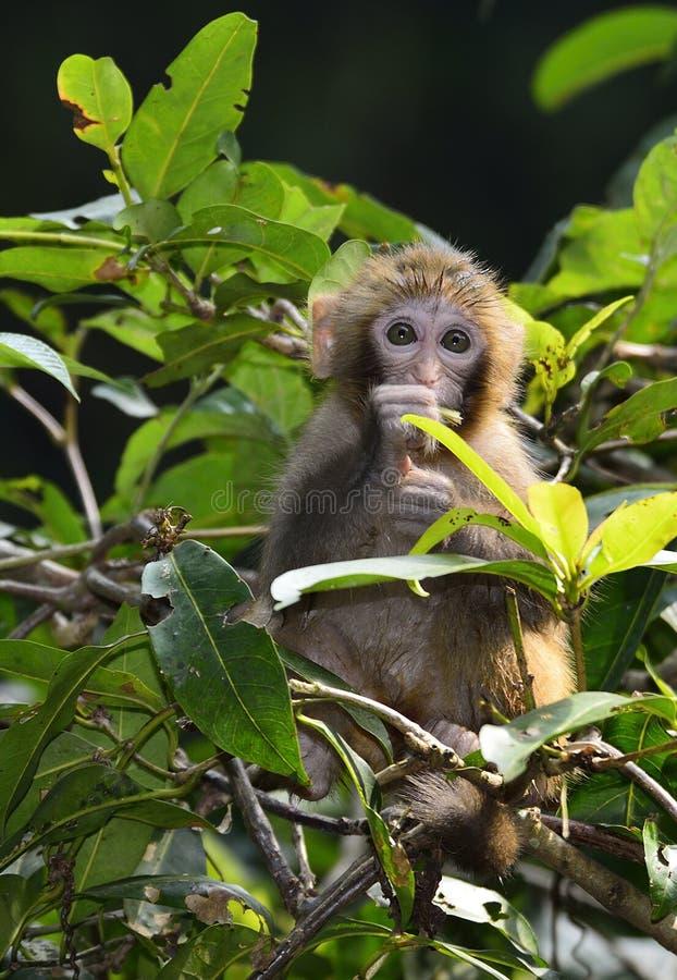 Милая обезьяна младенца есть листья стоковые изображения rf