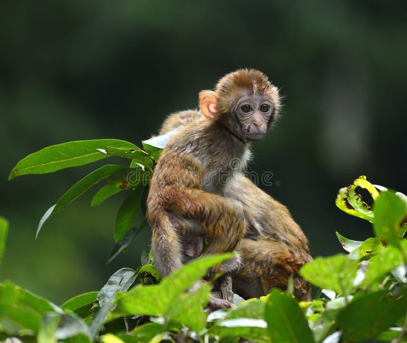 Милая обезьяна младенца стоковые фотографии rf