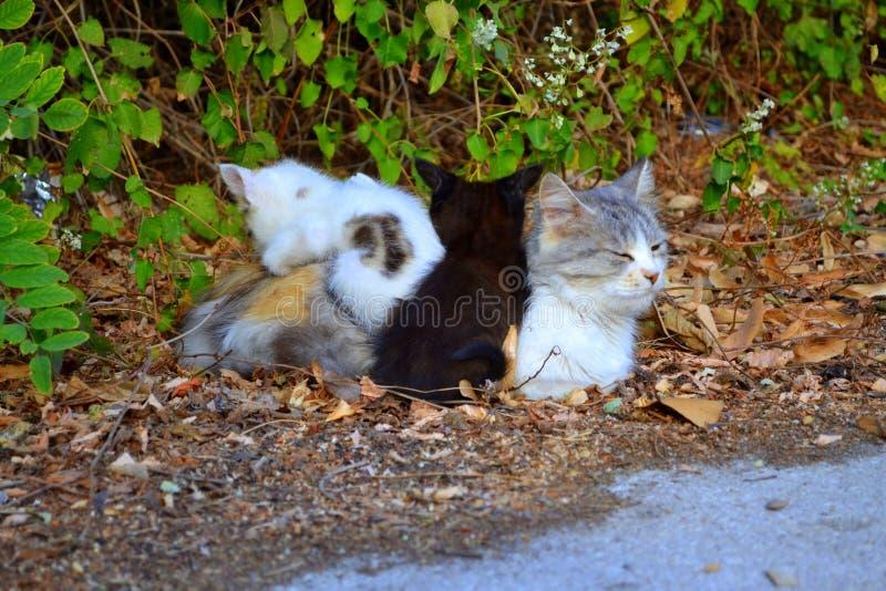 Милая семья кота стоковые изображения