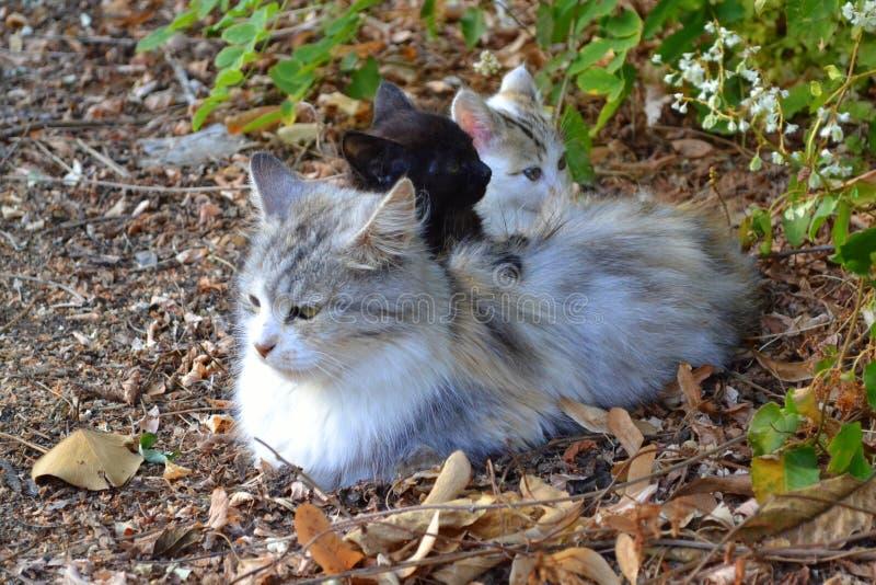 Милая семья кота стоковые фотографии rf