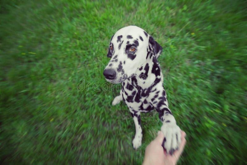 Милая собака дает свою лапку к предпринимателю стоковые изображения rf