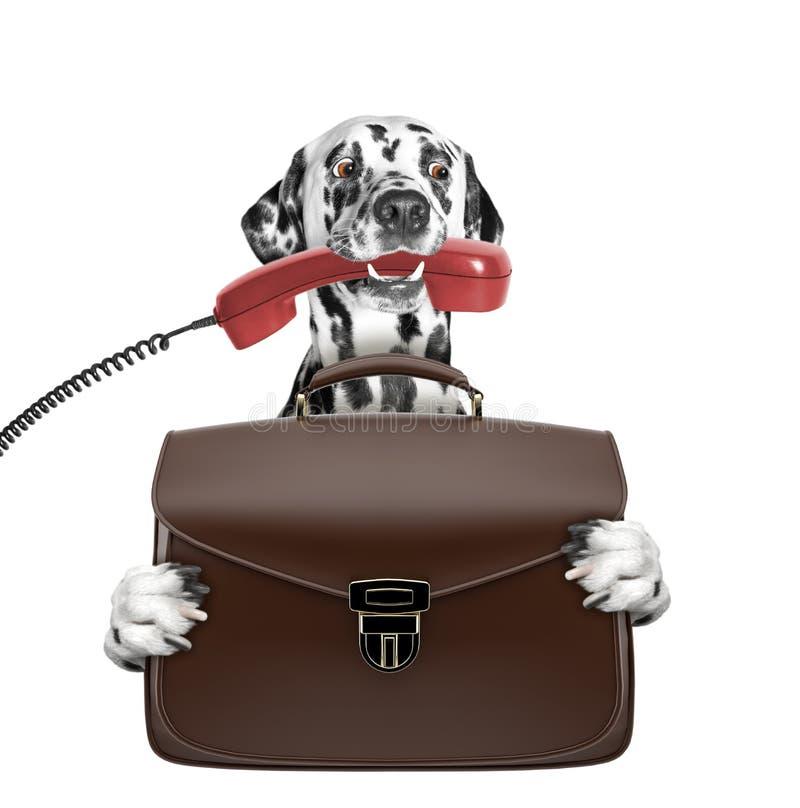 Милая собака бизнесмена работника офиса с чемоданом или сумка изолированная на белизне стоковые изображения rf