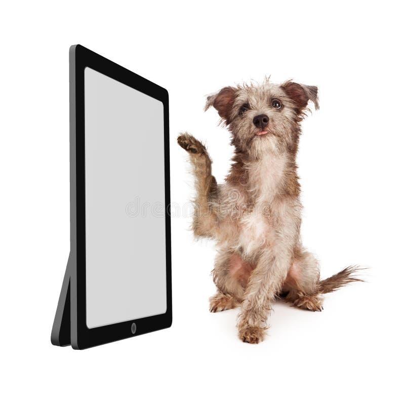 Милая собака перечисляя пустой планшет стоковые фотографии rf
