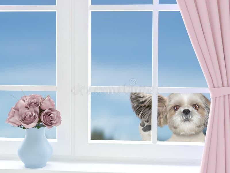 Милая собака смотря через окно стоковая фотография rf