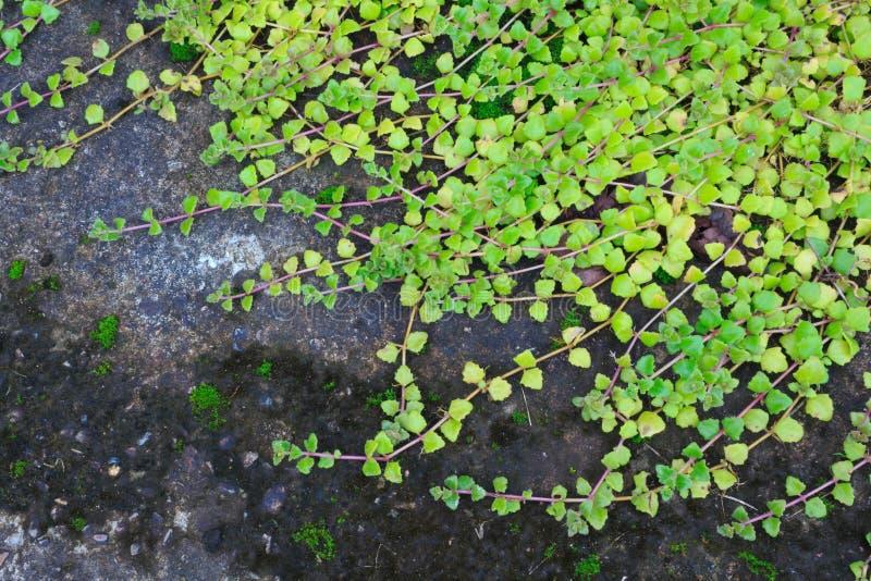 Download Миллион деревьев сердец стоковое фото. изображение насчитывающей флора - 33734666