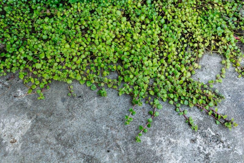 Download Миллион деревьев сердец стоковое фото. изображение насчитывающей завод - 33734672