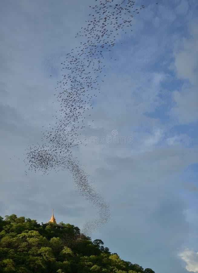 Миллион из летучих мышей ища для еды в вечере, Таиланд стоковая фотография