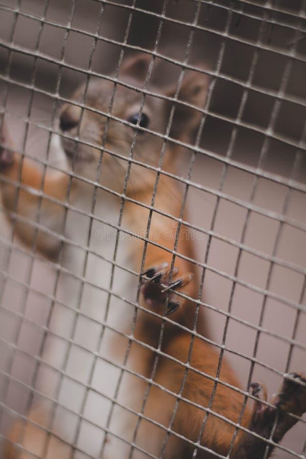 Милое сладостное коричневое squirel стоковое изображение rf