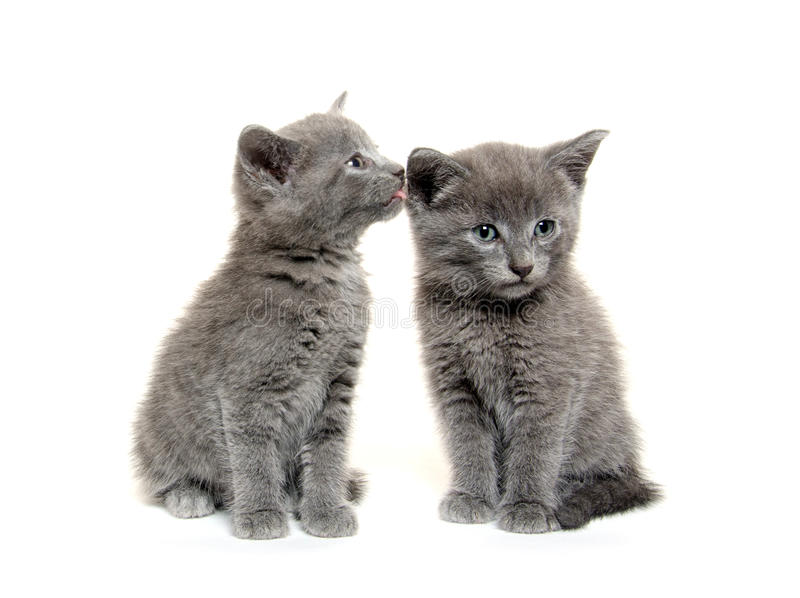 милые котята 2 стоковое фото rf