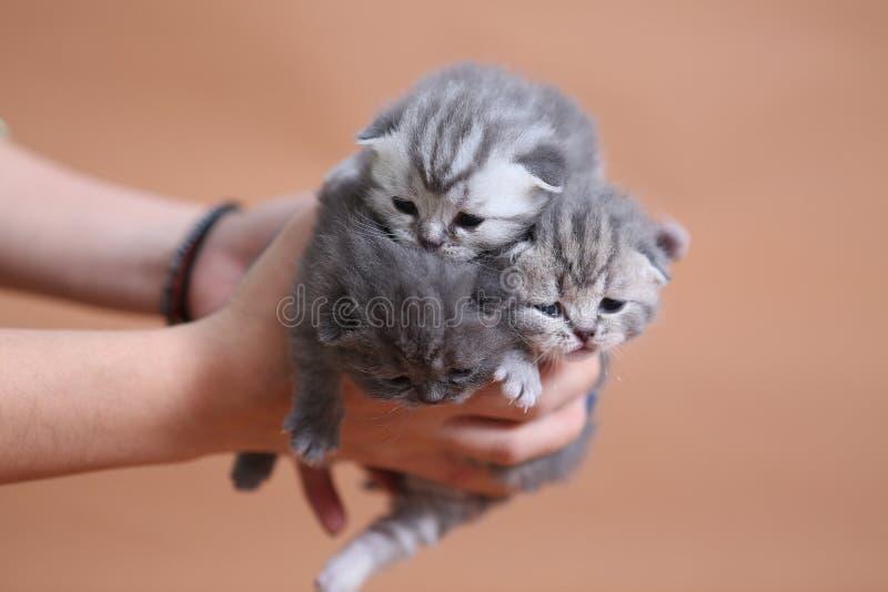 Милые малые котята младенца стоковая фотография rf
