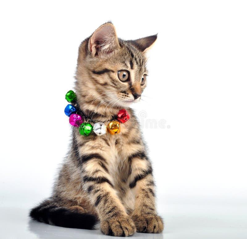 Милые малые witten с ожерельем стоковое фото rf
