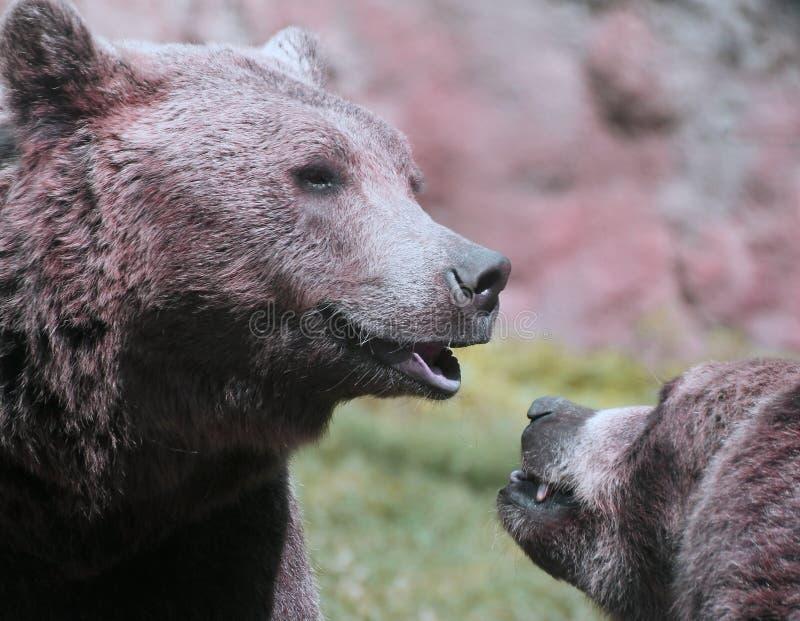 Милые медведи пока играющ весело стоковое изображение
