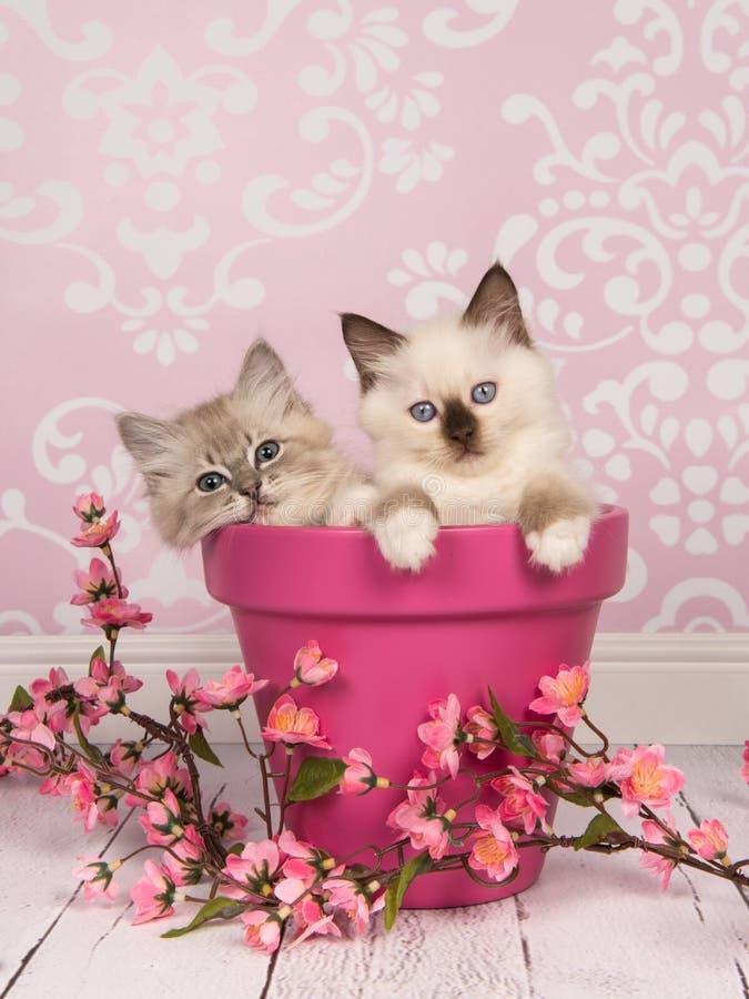Милые привлекательные коты котенка тряпичной куклы стоковая фотография rf