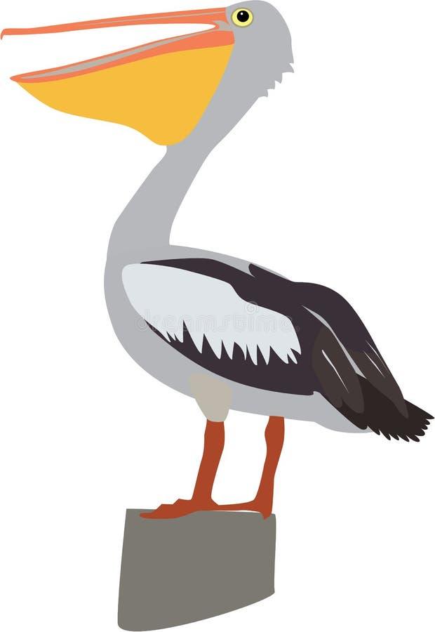 Милый вектор пеликана стоковые фото