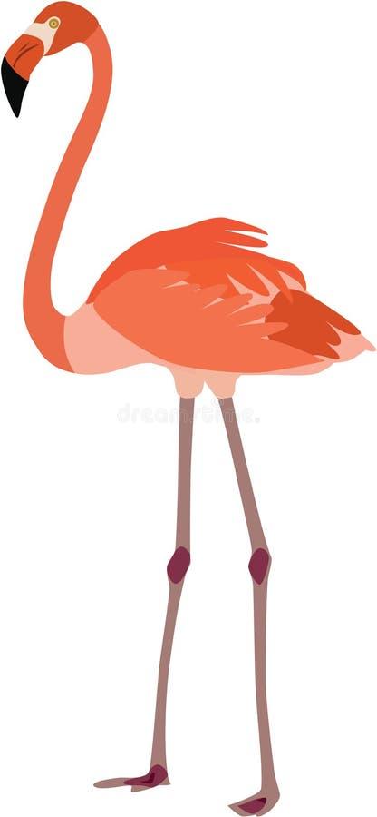 Милый вектор фламинго стоковые фотографии rf