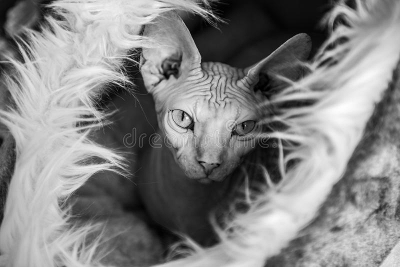 милый взгляд кота стоковое фото rf