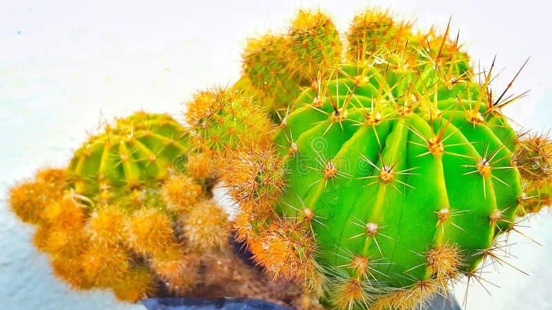 Милый кактус! стоковые фото