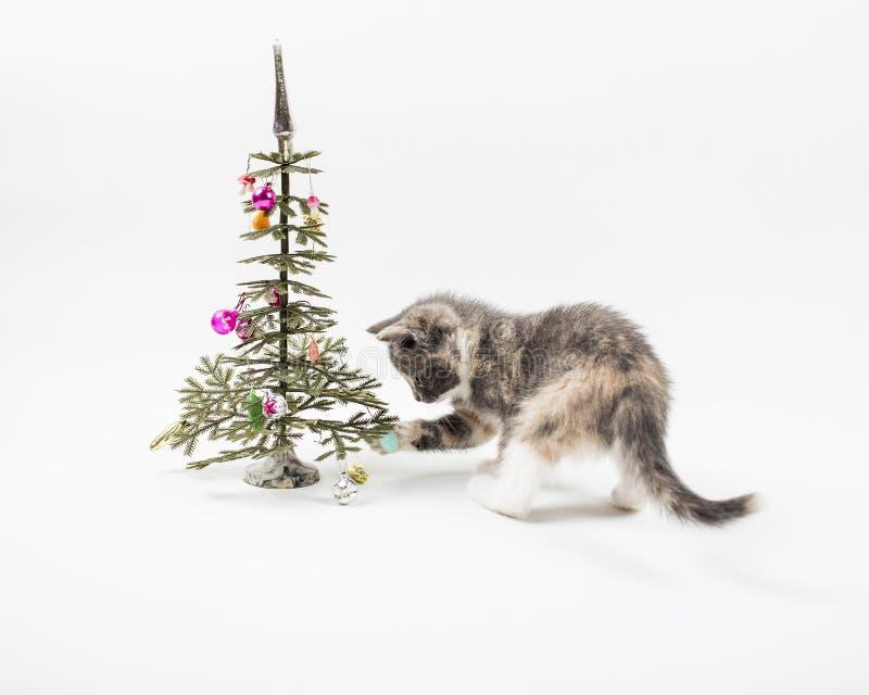 Милый котенок играя с tricolor покрашенные игрушки которые висят на a стоковое фото