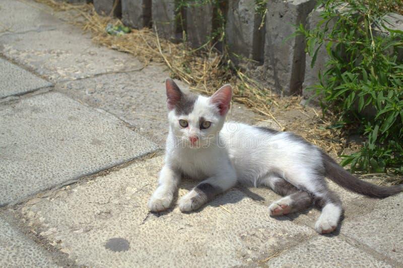 Милый котенок на мостоваой стоковое изображение