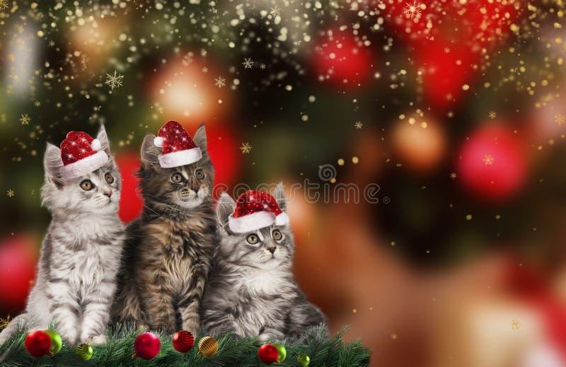 Милый котенок рождества с шляпами santa стоковое изображение