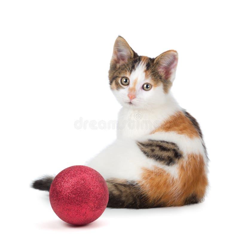 Милый котенок ситца сидя рядом с орнаментом рождества на whi стоковое фото