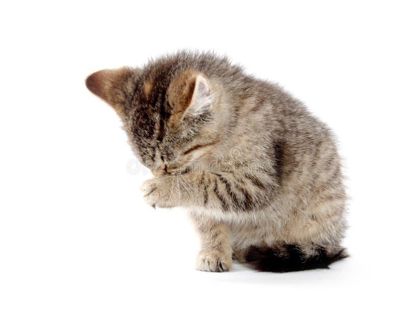 Милый котенок tabby стоковая фотография