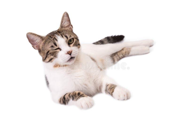 Милый кот лежа на белых предпосылке и подмигивать стоковое изображение rf