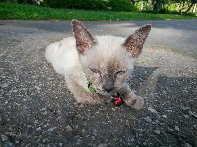 Милый кот наслаждаясь его светом жизни доступным стоковая фотография rf
