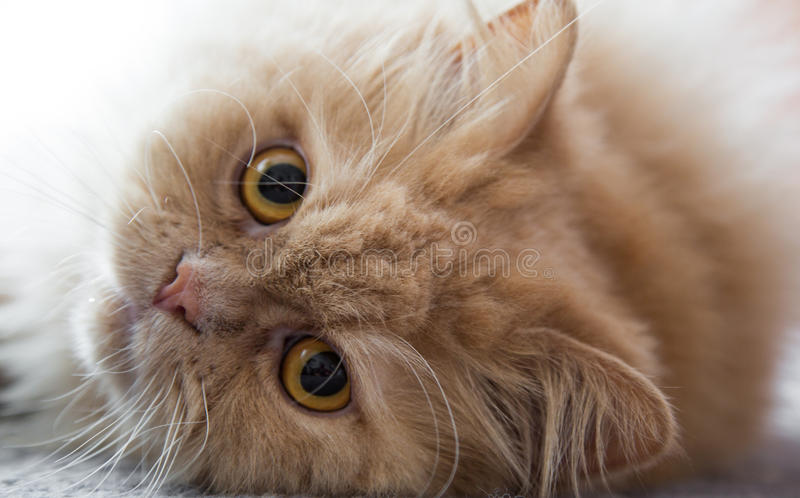 Милый кот с большими глазами стоковые изображения rf