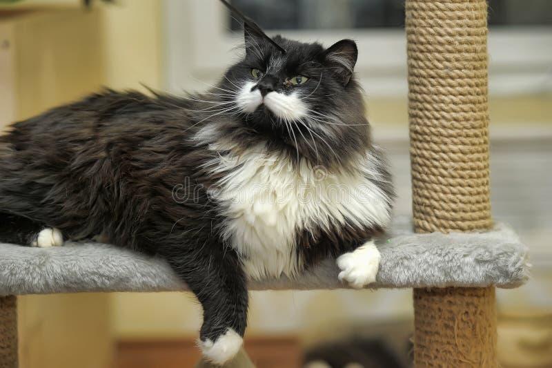 Милый кот царапая столб стоковые изображения rf