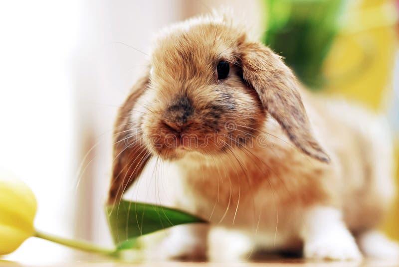 Милый маленький кролик стоковая фотография