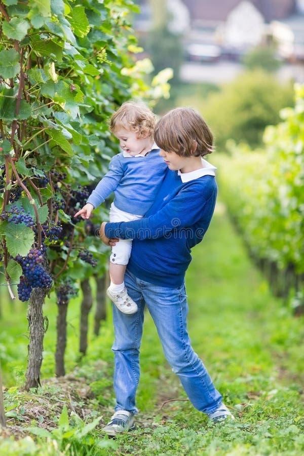 Милый мальчик и его сестра младенца выбирая свежие виноградины стоковое изображение