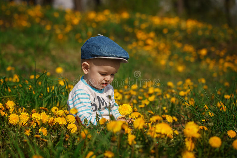 Милый мальчик с одуванчиками стоковое изображение rf