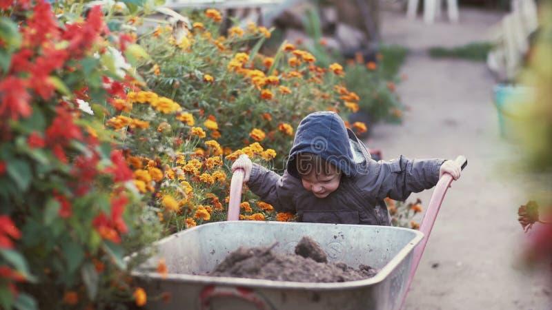 Милый мальчик управляя тачкой в саде через цветок Мужская попытка для того чтобы двинуть тележку, работу внешнюю 4K стоковое фото rf