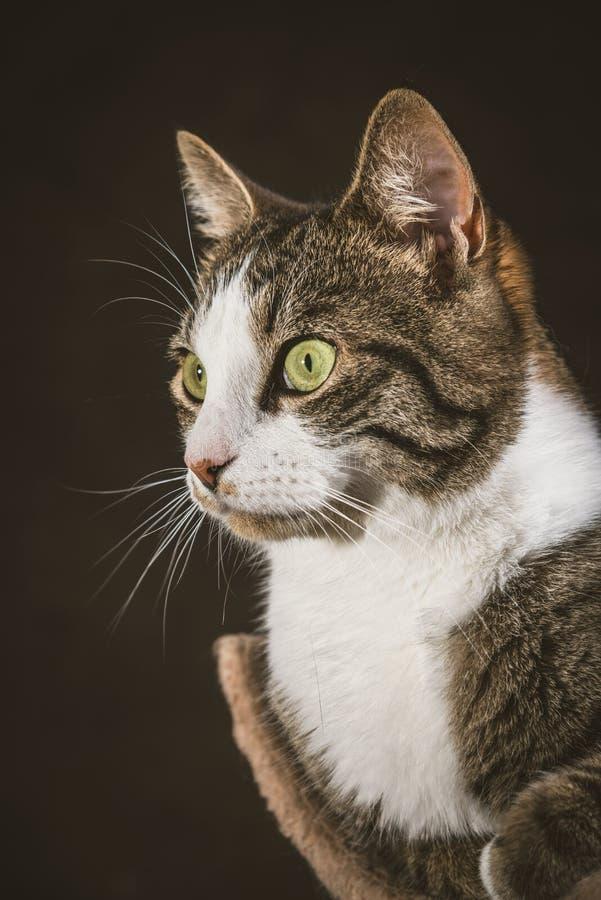 Милый молодой кот tabby при белый комод лежа на царапать столб против темной предпосылки ткани стоковые фотографии rf