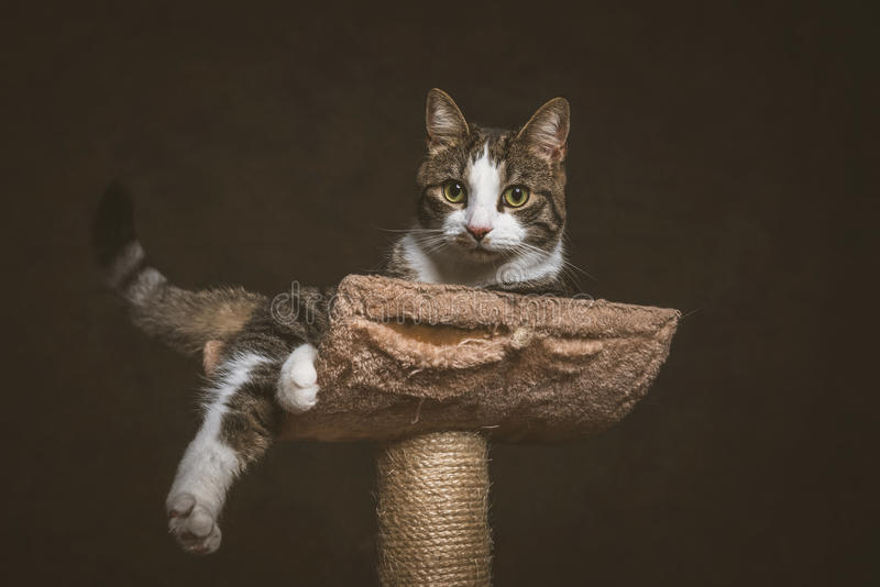Милый молодой кот tabby при белый комод лежа на царапать столб против темной предпосылки ткани стоковое изображение