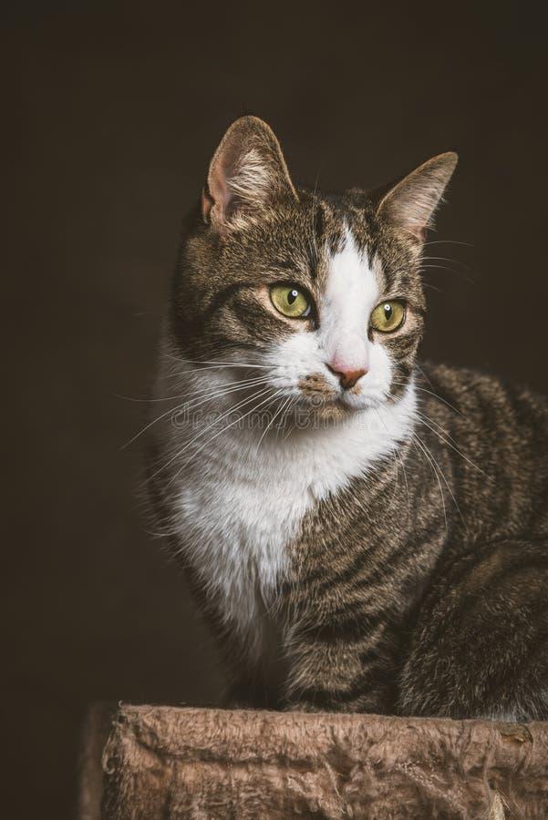 Милый молодой кот tabby при белый комод сидя на царапать столб против темной предпосылки ткани стоковое фото