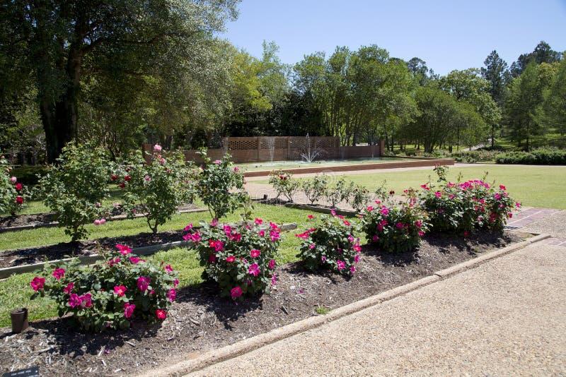 Милый розовый парк внутри Тайлера Техаса стоковые фотографии rf