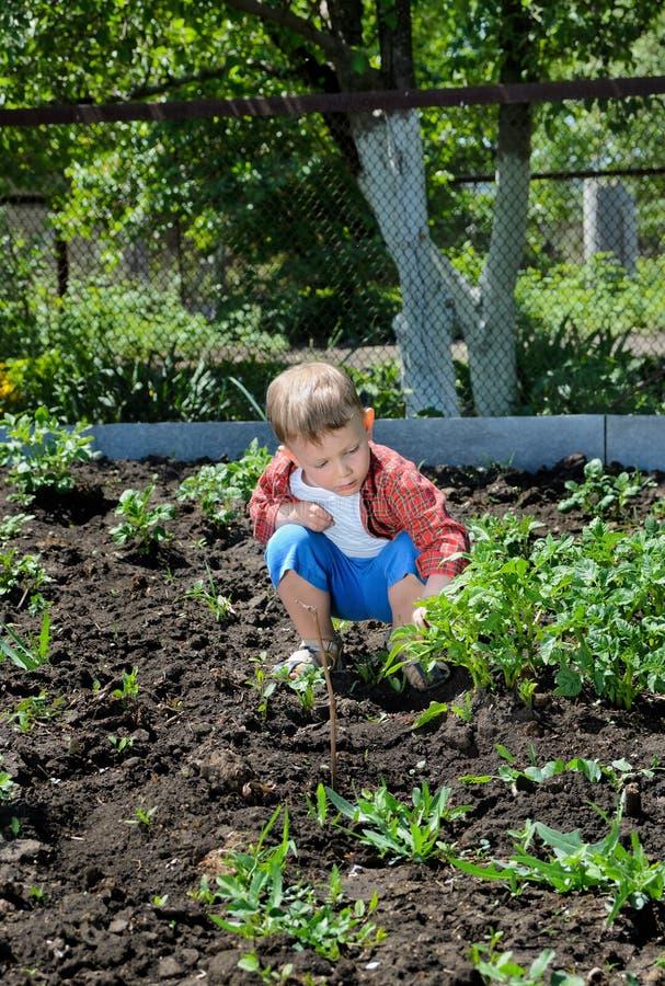 Милый садовничать мальчика стоковое изображение