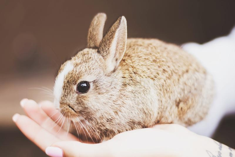 Милый сладостный коричневый кролик стоковые фотографии rf