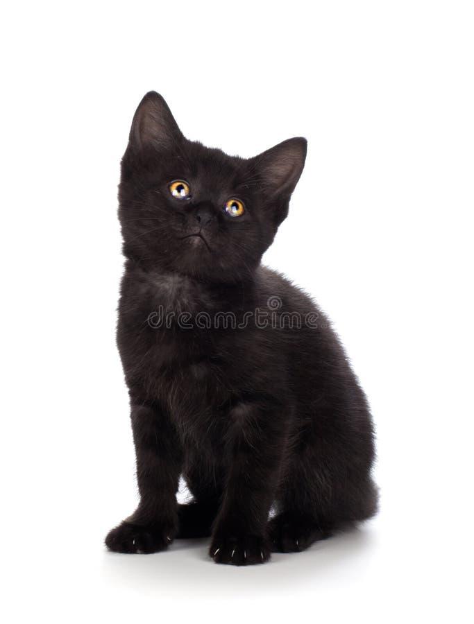 Милый черный котенок на белой предпосылке стоковое фото
