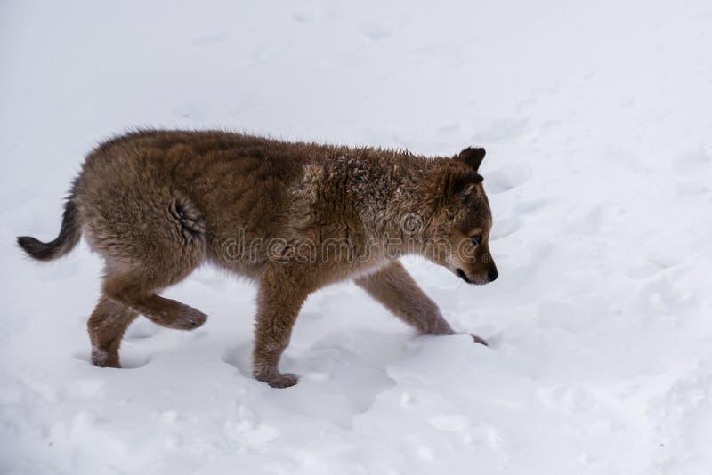 Милый щенок в снеге стоковые изображения