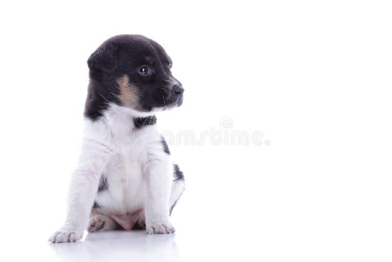 Милый щенок смотря copyspace стоковые фото