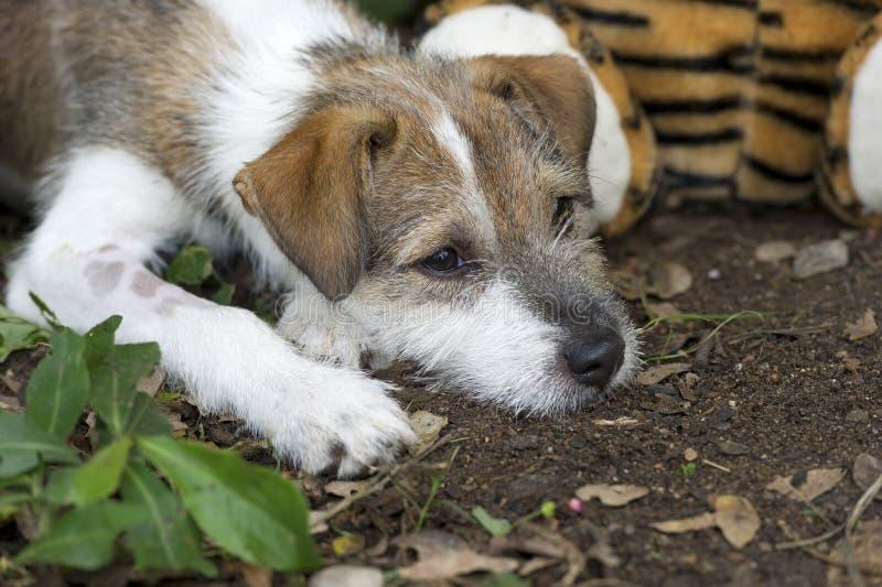 Милый щенок с унылой стороной стоковое изображение rf
