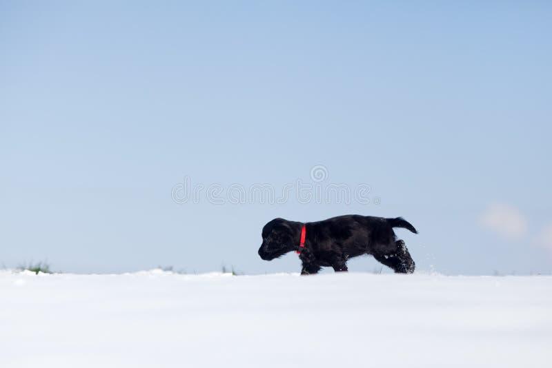 Милый щенок гуляет сиротливо в снежке стоковое изображение rf
